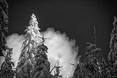 Im Bergwald II