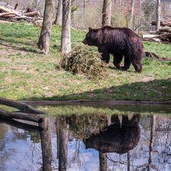 Im Berner Tierpark