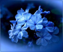 im blauen Licht