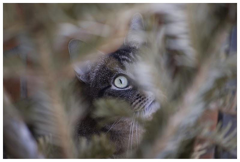 Im Blick