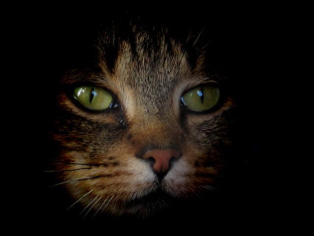 Im Blick der Katze