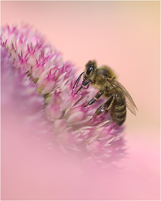 im Blütenparadies