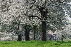 ~ Im Blütenrausch ~
