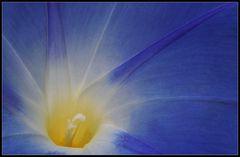 Im Blütenschlund - In the flower gorge