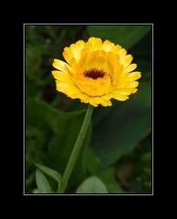 ... im Blumenbeet ....