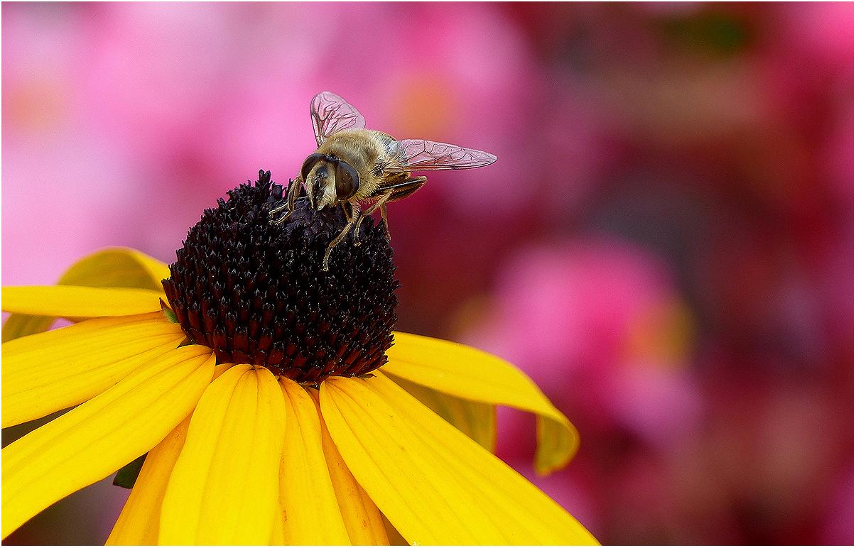 Im Blumenbeet (Niederrhein 016)