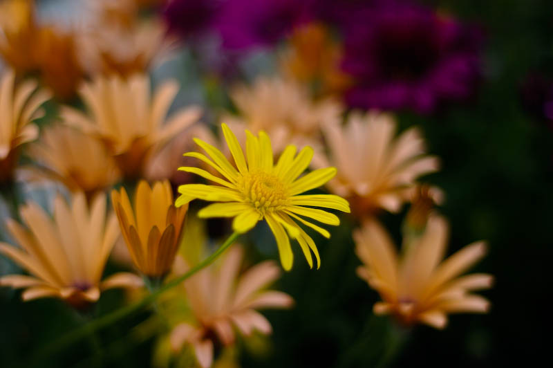 Im Blumenkasten