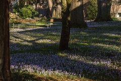 Im Botanischen Garten der Uni Basel 04