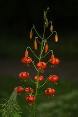 Im Botanischen Garten der Uni Basel 06
