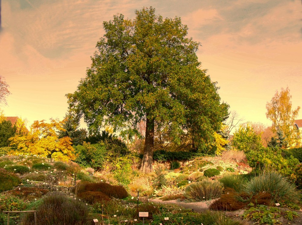 Im Botanischen Garten in Halle Saale