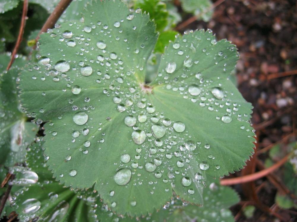 Im Botanischen Garten In Minden Foto Bild Pflanzen Pilze