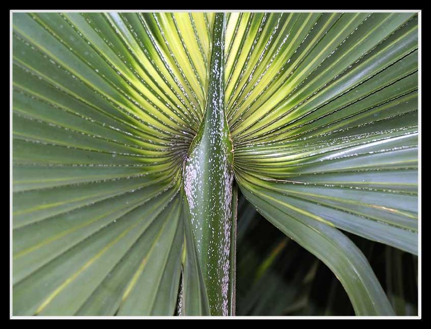Im botanischen Garten von Puerto 2