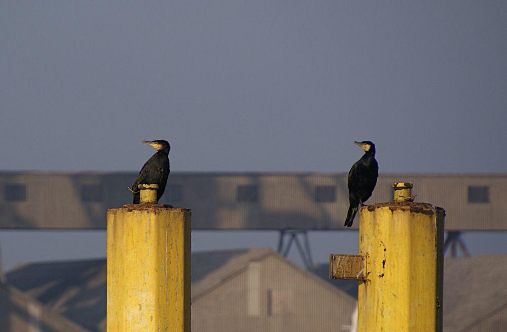 Im Bremer Hafen