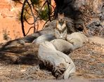 Im Bryce Canyon 3