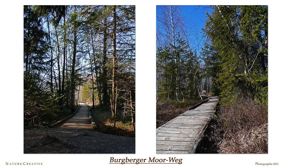"""""""Im Burgberger Moor-Wäldchen"""""""
