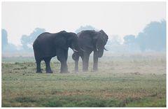 Im Chobe National Park