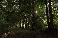 Im Darßer Urwald
