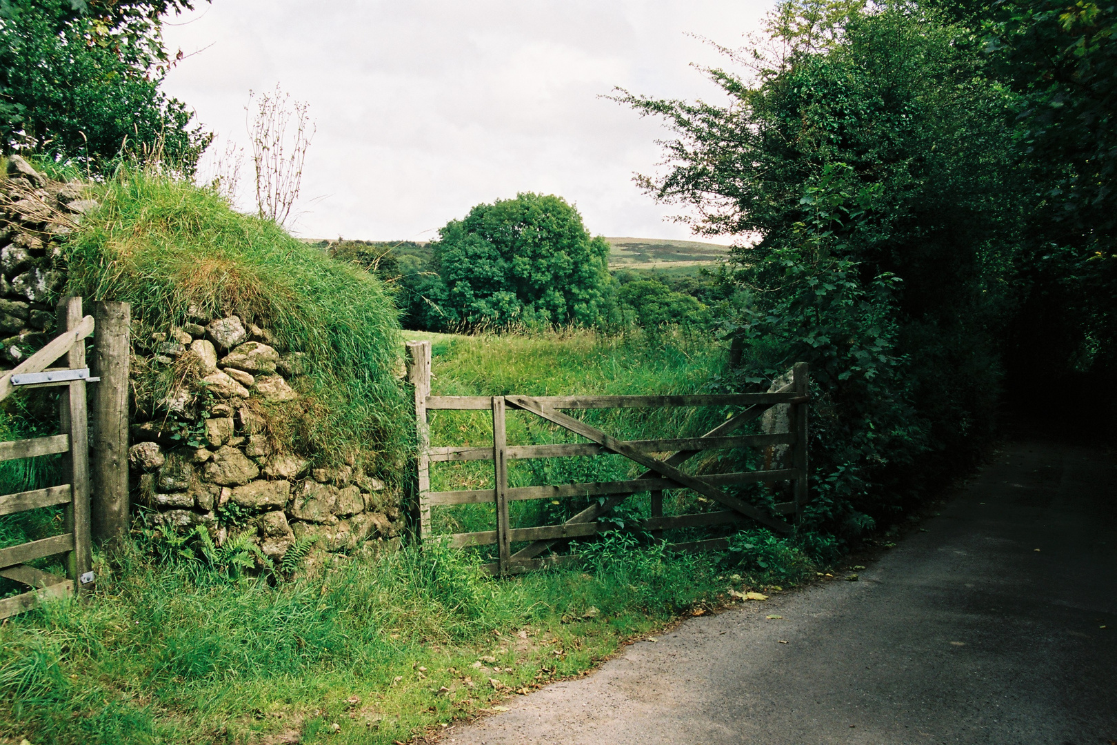 Im Dartmoor ... / 2007