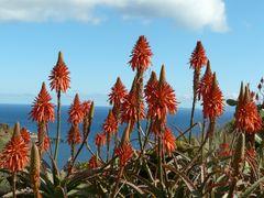Im Dezember auf Madeira
