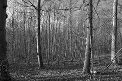 Im dichten, lichten, schlichten Wintewald