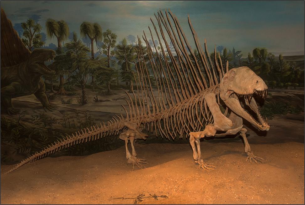 im dinosaurier museum