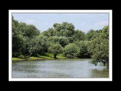 Im Donaudelta 10