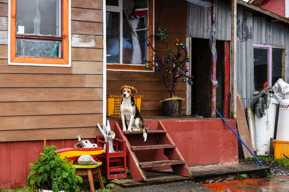 Im Dorf Puerto Eden                             DSC_6006-2