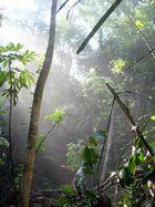 ...im Dschungel