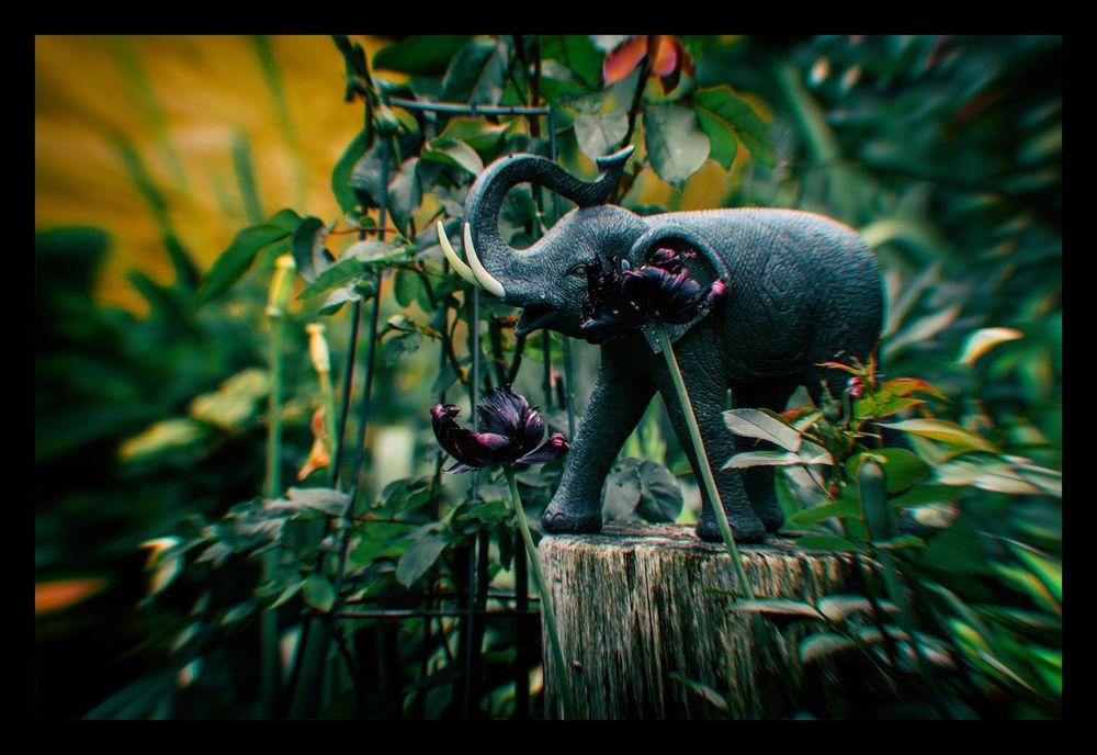 Im Dschungel hinter unserem Haus