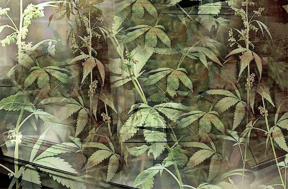 im Dschungel     :-x