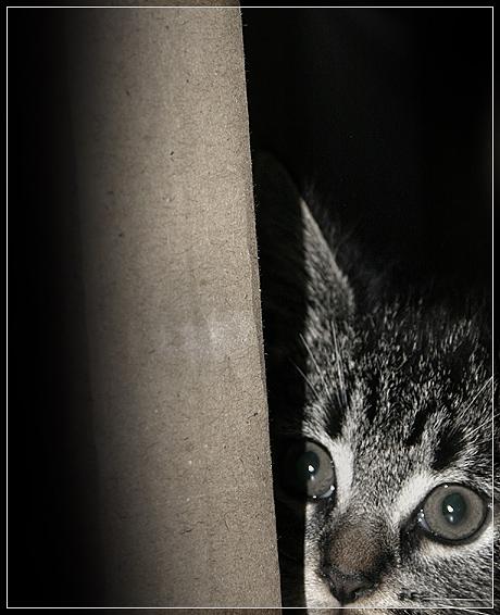 Im Dunkeln lauert das Böse ...