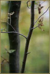 Im (dunklen Märchen-) Herbstwald