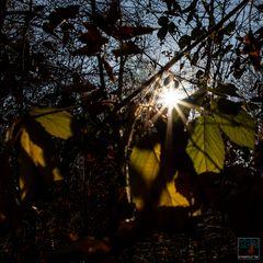 . . .  im dunklen Unterholz