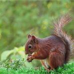 Im Eichhörnchenparadies II