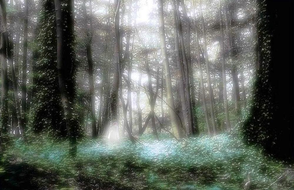 Im Elfenwald mit Elf