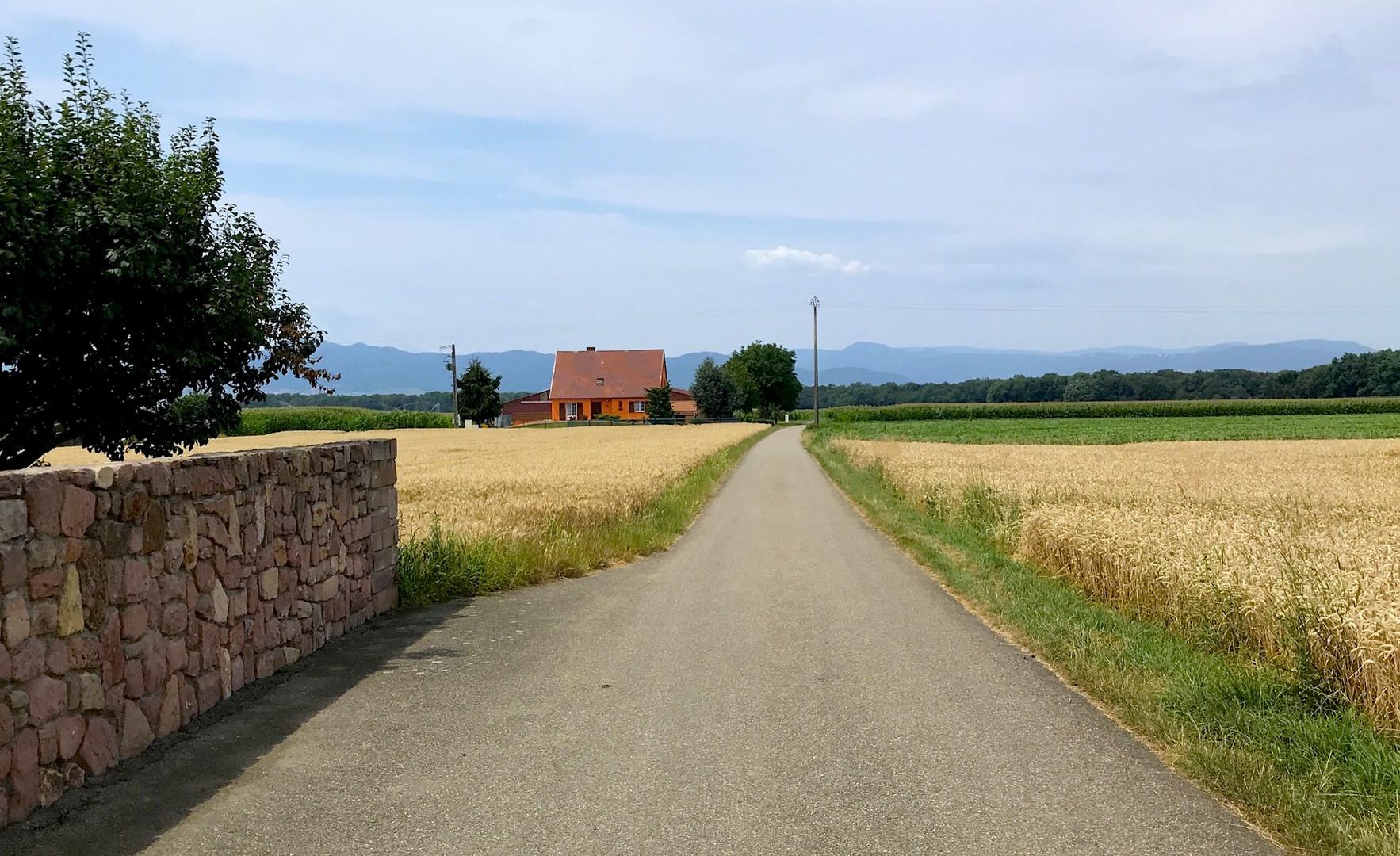Im Elsass bei Colmar (F).