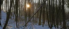 Im Erlen-Eschen Wald einem Naturschutzgebiet im Spargrund...