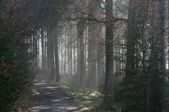 Im Feenwald