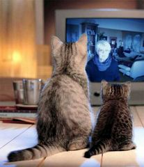 im Fernsehen......