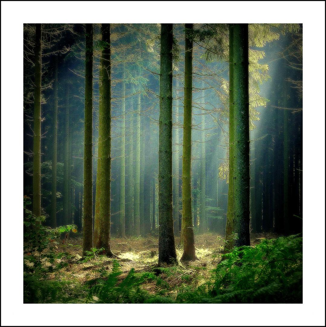 Im Fichtenwald (2)