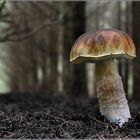 Im Fichtenwald hats Steinpilze.....
