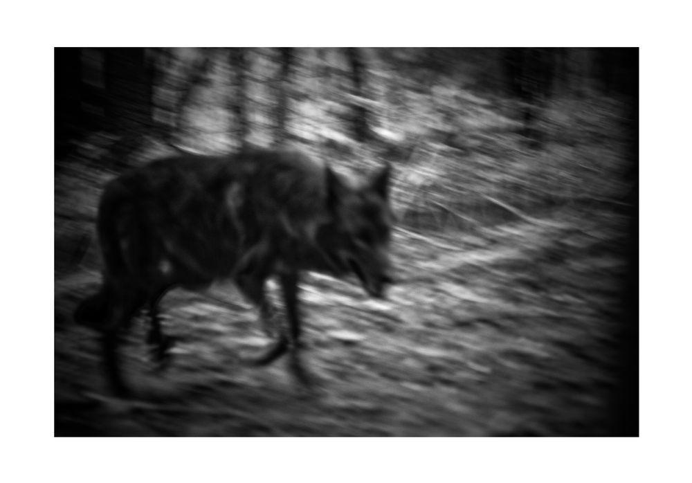 Im finsteren Wald...