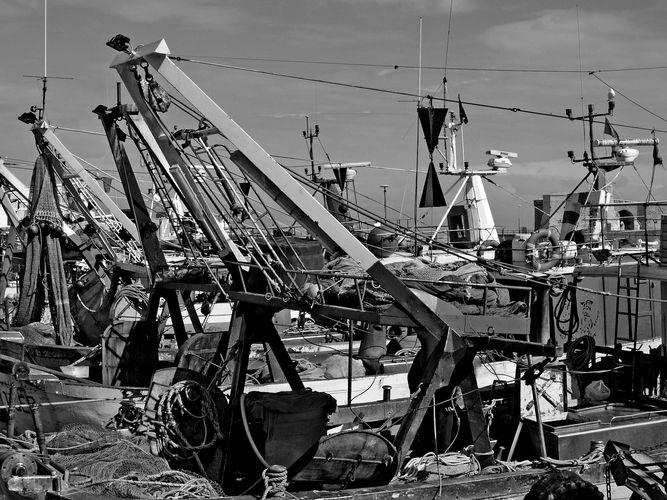 Im Fischerhafen von Trani / Italien
