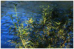 im Flusse