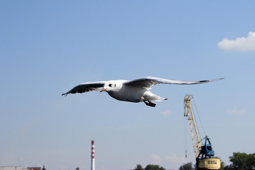 i'm flying... i'm flying...