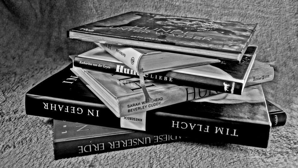 Im Fokus: Bücher
