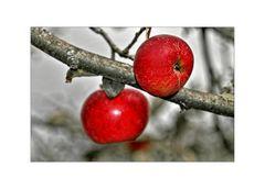 """im Fokus """"einheimisches Obst"""""""