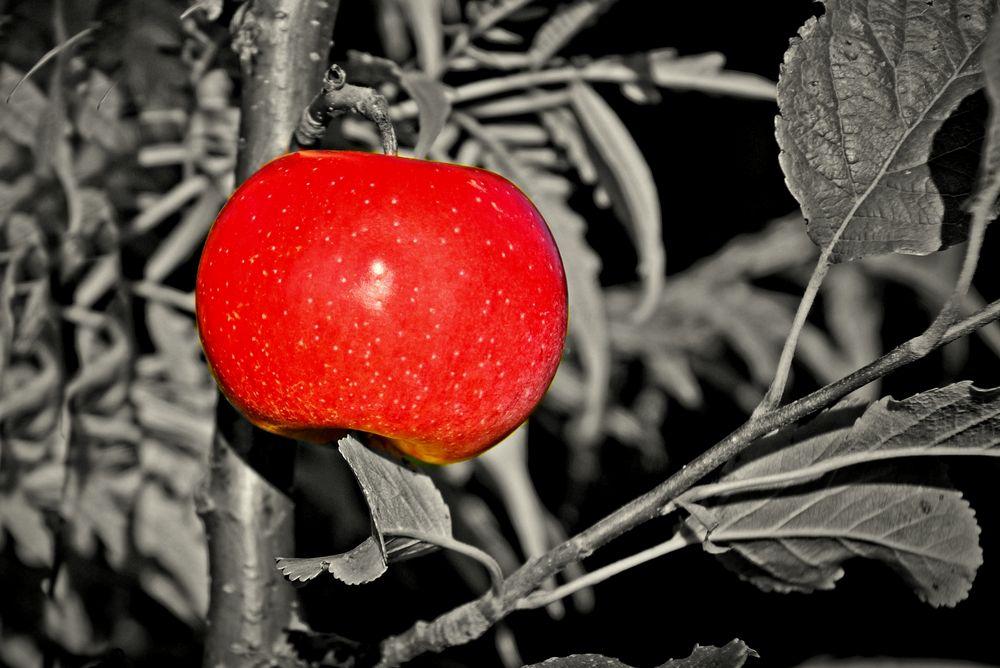 Im Fokus: einheimisches Obst