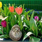 Im Fokus: Frühling