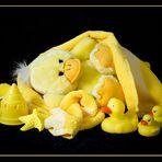 """""""im Fokus"""" Gelb"""